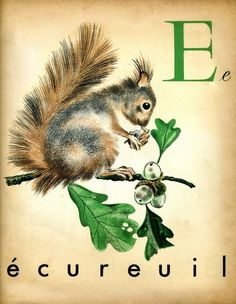 Vintage French alphabet print (squirrel) from The Interrupting Lion. More on my blog HERE.
