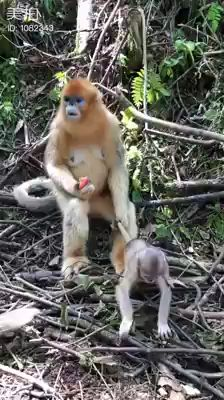 super Ideas for memes funny kids hilarious fun Funny Animal Videos, Funny Animal Pictures, Cute Funny Animals, Cute Baby Animals, Funny Cute, Funny Dogs, Funny Humor, Mom Humor, Nature Animals