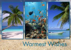 Paradise Under The Sea Tropical Beach Holiday Card - Advanced Printing & Graphic Solutions Tropical Christmas, Coastal Christmas, Beach Holiday, Christmas Quotes, Christmas Images, Holiday Cards, Christmas Cards, Under The Sea, Photo Cards