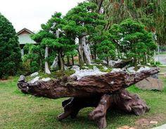 a bonsai tree forest . Indoor Bonsai Tree, Bonsai Plants, Bonsai Garden, Plantas Bonsai, Bonsai Forest, Tree Forest, Belle Plante, Bonsai Styles, Miniature Trees