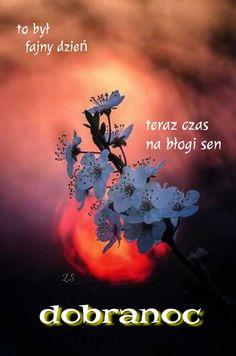 Good Morning Good Night, Good Night Quotes, Krishnamurti, Good Night Sweet Dreams, Disney, Facebook, Beautiful, Frases, Be Nice