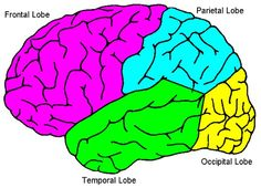 Neuroscience For Kids - experiments, games, worksheets etc.