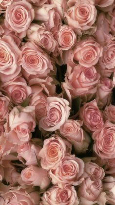 Lindas rosas 2019 Lindas rosas The post Lindas rosas 2019 appeared first on Flowers Decor. Flower Background Wallpaper, Rose Background, Flower Backgrounds, Pink Wallpaper, Colorful Wallpaper, Wallpaper Backgrounds, Amazing Flowers, Beautiful Roses, Pretty Flowers