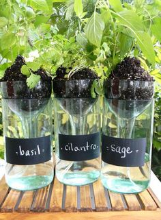 DIY wine bottle planters! Love this idea...its supposed to be self watering too :) More