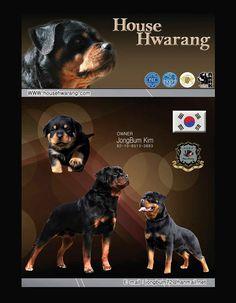 House Hwarang Owner: JongBum Kim 82-10-8513-3883 South Korea househwarang@korea.com www.househwarang.com