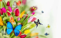 Butterfly backgrounds flowers butterflies wallpapers pictures butterfly on flowers spring flowers names pictures of spring flowers tulips flowers flower mightylinksfo