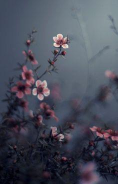 Ideas For Flowers Photography Dark Flora Dark Flowers, Beautiful Flowers, Tiny Flowers, Beautiful Gorgeous, Vintage Flowers, Vintage Photography, Nature Photography, Photography Flowers, Waves Photography