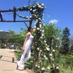Hoy he estado en el Parque Cervantes, un parque lleno de multitud de rosas y donde cada Mayo se hace un concurso para escoger la más bonita.  ______________  Today enjoying Barcelonas roses parc