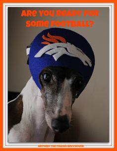 Antonio the Italian Greyhound - love this little guy like he's my own! #broncos #nfl
