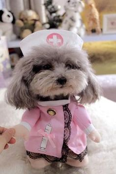 Funny Dog Clothes Pet Costume Suit Cool Dog Halloween Costume Puppy Clothes Outfit for Dog Clothing Nurse Policeman Cat Dog Costume, Pet Costumes For Dogs, Dog Halloween Costumes, Nurse Costume, Funny Costumes, Halloween Puppy, Halloween Suits, Funny Halloween, Small Dog Coats