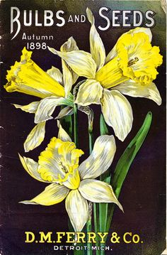 A collection of antique seed catalogs; click through for MANY more
