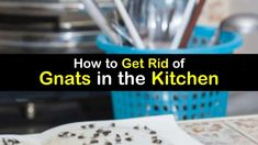 3 Great Ways to Get Rid of Gnats in the Kitchen Small Flies In Kitchen, Small Flies In House, Gnats In Kitchen, Fly Remedies, Home Remedies, Gnat Traps, How To Get Rid Of Gnats, Rotten Fruit