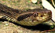 Globo Rural - Falta de cobertura vegetal e ambiente desorganizado atraem cobras | globo.tv
