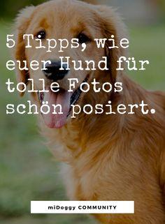 || #Hund || Ideen || #Hunde || Tipps || Tricks || Ideen || Liebe || Welpen || Bilder || Fotografie
