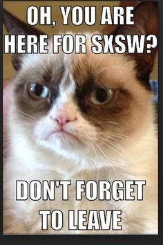 42 Ideas For Memes Humor Laughing Grumpy Cat