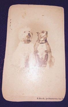 Victorian Dog Photographs-colección C.H.