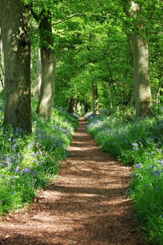 Wallingford, England, beautiful country lane......