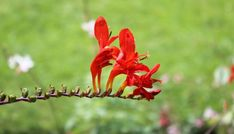 Zen soyons zen... Zen, Blog, Flowers, Plants, Planters, Flower, Plant, Planting, Planets