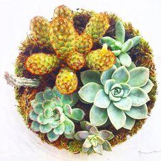 Vista Superior Terrário G  Facebook.com/ateliepiOficial instagram: @ateliepi www.elo7.com.br/ateliepi