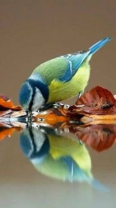 A tit / a blue tit ( well it's getting cold !! ) ✅