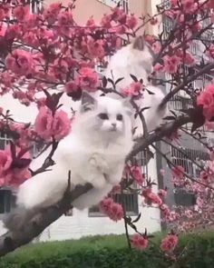 Cats Grow on Trees - Cutest Baby Animals Funny Animal Videos, Cute Funny Animals, Cute Baby Animals, Animals And Pets, Funny Cats, Cute Dogs, Cute Cats And Kittens, I Love Cats, Crazy Cats