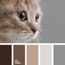 grey and brown color combinations