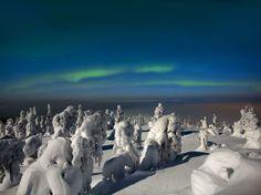 árvores cobertas de neve e aurora boreal, na Finlândia, a uma temperatura de 20 graus negativos.