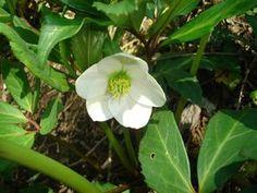 Italy, Prato, Spring, Flower, Nature, White #italy, #prato, #spring, #flower, #nature, #white