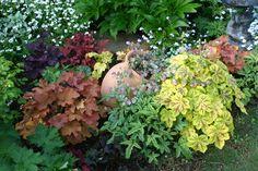 ヒューケラ オレガノ・ケントビューティ Side Garden, Green Garden, Garden Paths, Garden Landscaping, Heuchera, Flower Beds, Garden Inspiration, Gardening, Landscape