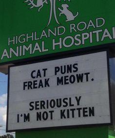 Cat puns freak meowt. Funny Cat Jokes, Cat Puns, Puns Jokes, Corny Jokes, Dad Jokes, Funny Texts, Puns Hilarious, Tgif Funny, Funny Weekend