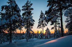 Sunset while cross country skiing to Hamptjärnsstugan in Umeå, Sweden. (January 2013)
