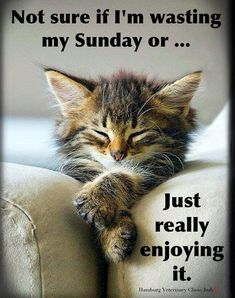 40 super ideas for sunday quotes funny humor animal pictures Sunday Humor, Sunday Quotes Funny, Morning Humor, Funny Quotes, Funny Memes, Funny Sunday, Cat Memes, Videos Funny, Cute Cats