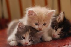 3 LITTLE KITTENS, LOST THEIR MITTENS