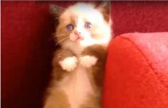 Sale a 178 il numero dei gattini morti d'infarto a causa dello scherzo del cetriolo