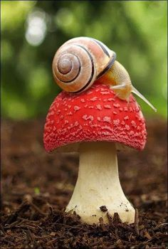 Cute snail. It shows that you must slow down, even for the slowest animal, or you just might miss whats going on right now