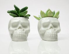 This is a skull planter is beautiful minimal statement piece,  A perfect boho, modern touch for your interior decoration, home or working space