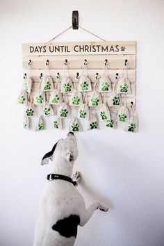 Diy Dog Gifts, Dog Lover Gifts, Gifts For Dogs, Christmas Dog, Christmas Crafts, Christmas Countdown, Christmas Tables, Nordic Christmas, Christmas Kitchen