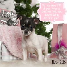 Giving a pet as a Christmas gift is a bad idea for a lot of reasons. Read my blog post to learn just a few!  Click here ---> http://www.thelazypitbull.com/2013/12/no-more-christmas-puppies/