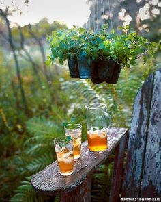 Newly snipped mint leaves make a refreshing garnish for summer drinks, and this outdoor chandelier keeps the herb within arm's reach.
