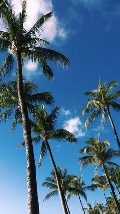 New palm tree background sky ideas Et Wallpaper, Blue Wallpaper Iphone, Summer Wallpaper, Screen Wallpaper, Phone Backgrounds, Blue Backgrounds, Wallpaper Backgrounds, Palm Tree Background, Tropical Vibes