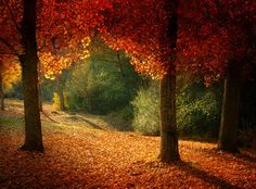 Delicious autumn! My very soul is wedded to it, and if I were a bird I would fly about the earth seeking the successive autumns.   George Eliot