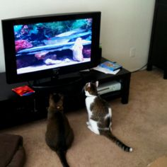 Cat TV (it's a real set of DVDs you an order called Cat Sitter) they love it.