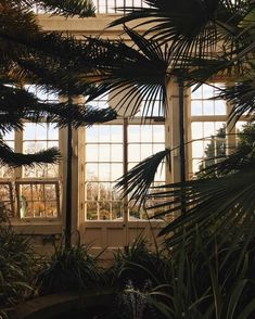 Magical light in the glasshouses earlier.