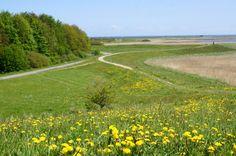 Die Schlei ist ein Geheimtipp in Schleswig-Holstein. Unsere Reisetipps für die Schlei und das wunderschöne Örtchen Maasholm.