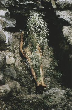 Tree of Life by Ana Mendieta, photographed by Hans Breder, 1979