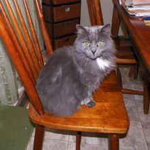 5 Ways My Cats Are Master Manipulators