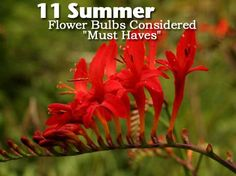 """11 Summer Flower Bulbs Considered """"Must Haves"""""""