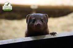 Die Tiere sind neugierig und beobachten ihr Umfeld stets sehr genau.