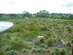 Semi-intensive roof garden at the Waitakere Council Building in Henderson, Auckland, New Zealand.  Mostly natives used and also mainly alpine plants seem to thrive in this environment so far.  There may be a chance for some native skinks to be released if the testing of this area as a pest-free environment is positive.