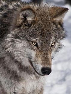 Que belleza de ojos y de animal!